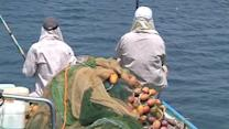 Ceasefire boost for Gaza's fishermen