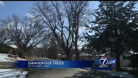 Woman waits three years for tree to be removed