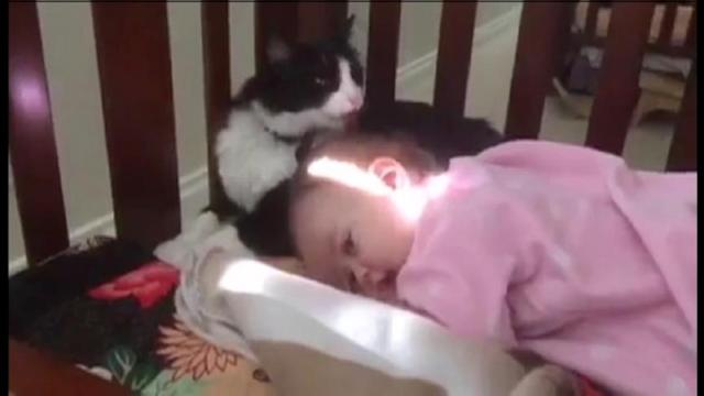 Cat Gives Baby a Bath