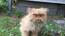 Homeless Grumpy Cat Adopted by Home Inspector
