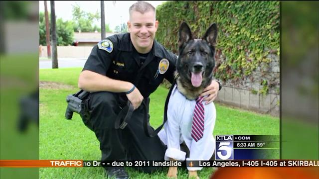 Injured Anaheim Police K-9 `Bruno` Continues Recovery