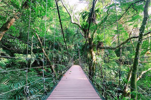 大板根森林吊橋美景