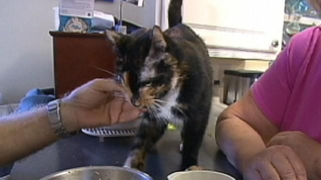 Cat Lost on Vacation Travels Nearly 200 Miles Back Home