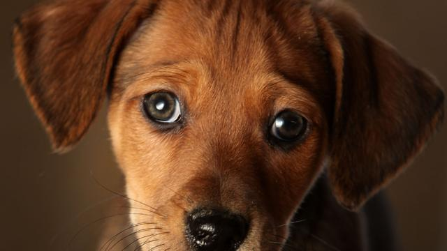 Ways to save on pet health care costs