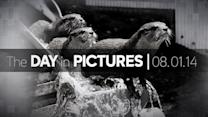Day in Pictures: 8/1/14