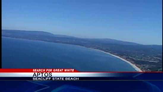 Great white shark in Aptos does not stop beach-goers