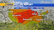 High Tree Pollen Across the Northern Midwest