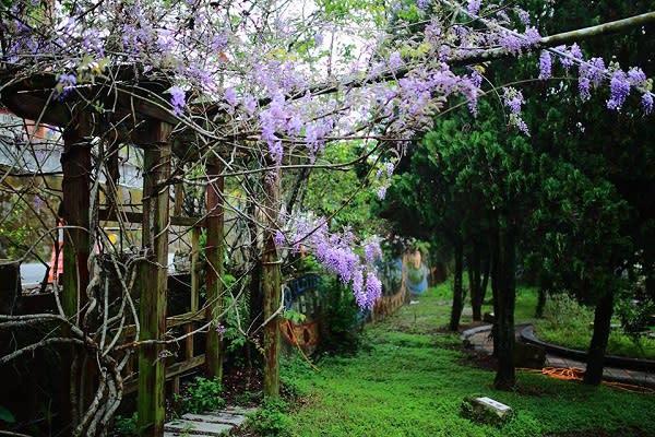 當地公布了17處賞花景點,目前多處景點開花約四成,大家可沿166縣道,一邊遊玩一邊欣賞紫藤花的紫色浪漫。