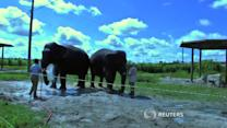 Scientists probe elephant genes for cancer clues