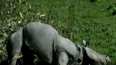 Dead's Park; Kaziranga becomes poachers' game field