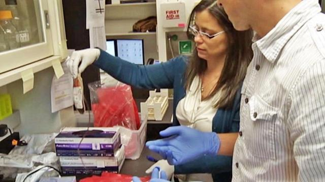 Placenta blood shows promise in stem-cell cancer treatment