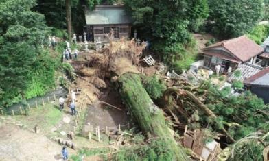 不敵大雨 日本1300年神木倒了