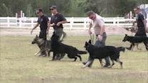 Park event to raise funds for Glendale police dogs