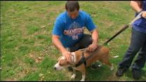 New Jersey Family Reunited with Pet Lost During Sandy