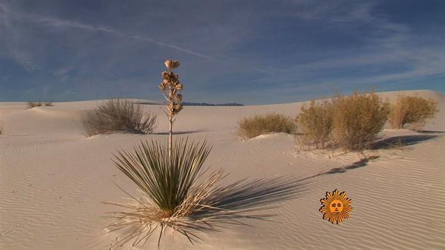 Nature: White Sands