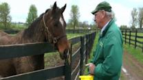 Refuge for Derby Racehorses Past Their Prime