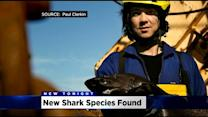 Sacramento Researcher On Shark Week After Discovering Eight New Species Of Sharks
