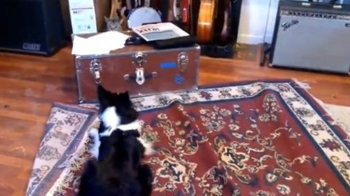 Sheepdog tries to 'herd' cat; cat not interested