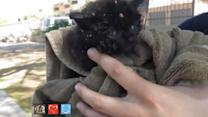 Adorable Kitten Rescued From Manhole in Arizona