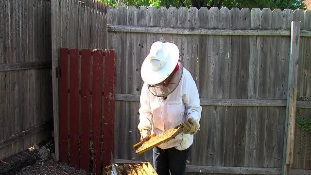 Beekeeping is a honey of an endeavor