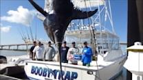 Fishermen catch Texas state record swordfish
