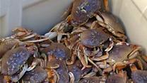 Oregon boat catching crab in SF Bay despite strike