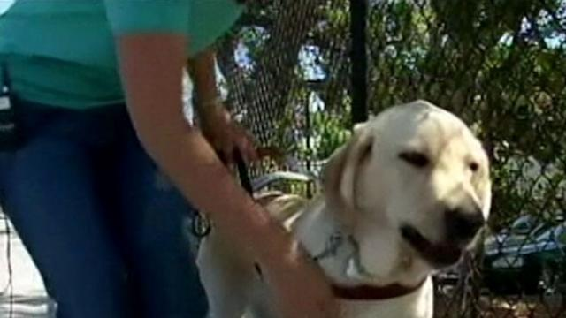 Instant Index: Seeing Eye Dog in Training Drags 2 People to Safety