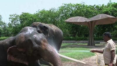 Raw: India Zoo Keeps Animals Cool in Heatwave