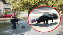 Cop Helps Skunk Stuck In A Yogurt Cup