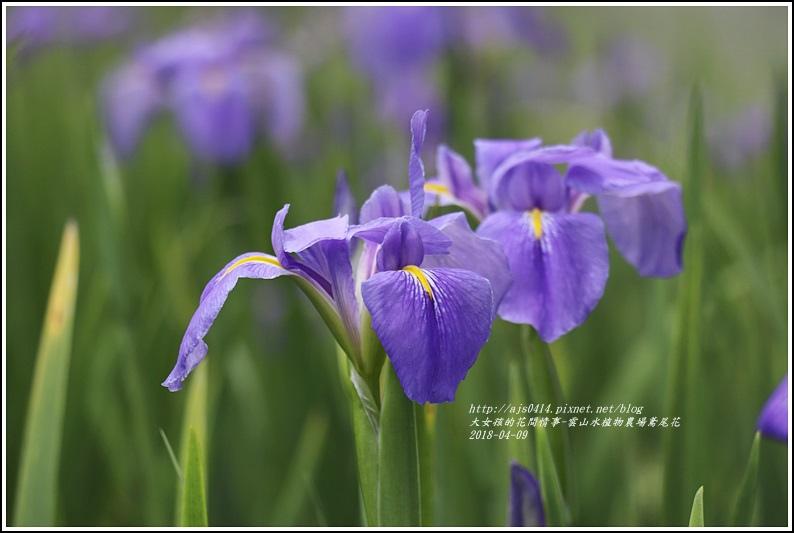 雲山水植物農場鳶尾花-2018-04-09.jpg