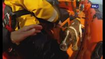 Dog rescued by RNLI after being missing for a week