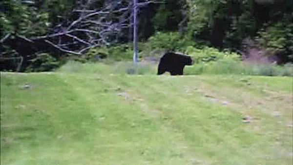 Bucks County bear now spotted in Bristol Twp.