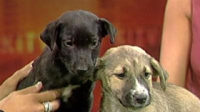 Pets On Set: Cranberry And Pecan Pie Need A Home
