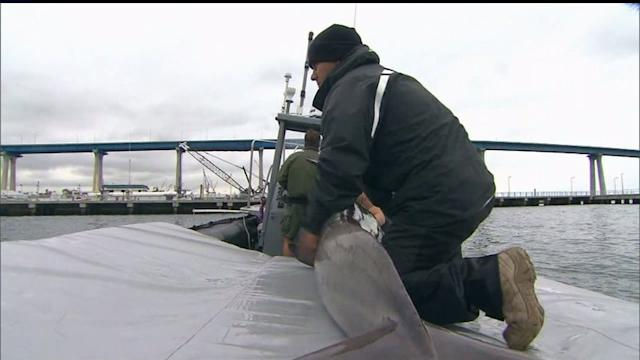 Dolphins Make Rare Discovery