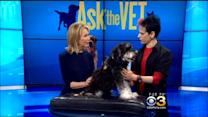 Ask The Vet: Radiation For Pets