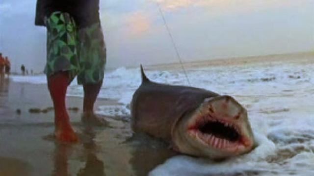 N.J. man catches and releases sharks