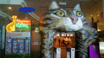 Go Inside The Malaysian Cat Museum