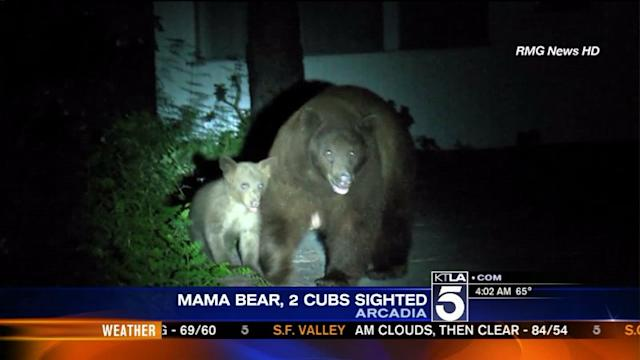 Another Day, Another Bear Sighting