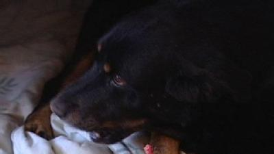 Dogs Rescued From Hoarder Need Homes