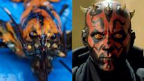 Lobster Resembles Star Wars Villain