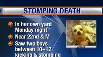 Dog Dies After Boys Stomp It