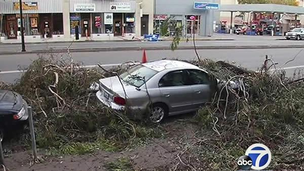 Strong winds bring down trees across the Bay Area