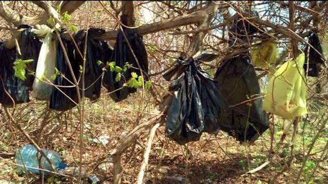 Dozens of Cats Found Hanging from Trees in New York