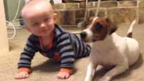 Family Dog Teaches Baby How to Crawl