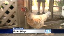 Thieves Steal Chickens From Marysville Nonprofit For Disabled Adults