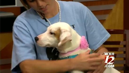 Pet Of The Week: Page