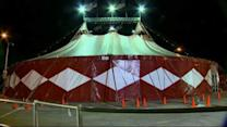 Camel escapes from circus