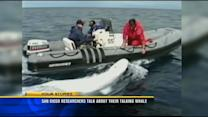 San Diego researchers talk about their talking whale