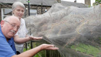 Giant Caterpillar Web Takes Over Backyard