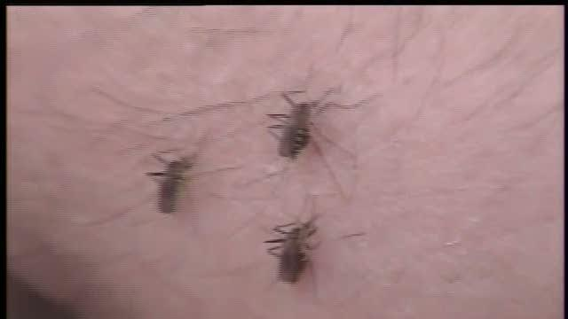 Angie's List Mosquito control